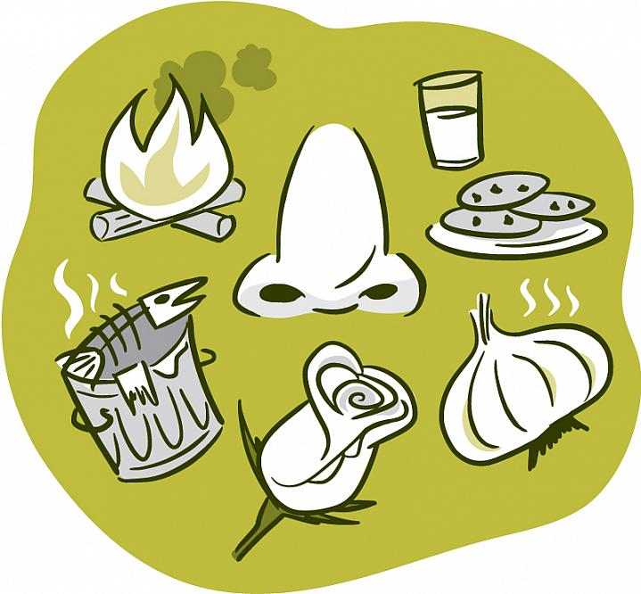 Illustration of a nose surrounded by smelly things, like a rose, garlic, and a smoky fire.