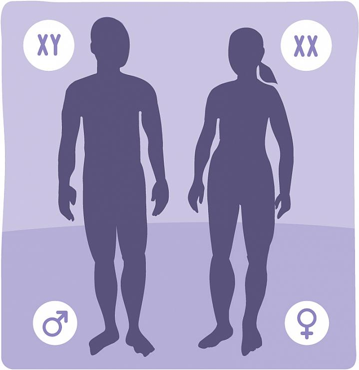 Silhouettes of a man and a woman showing the XY symbol next to the male and XX next to the female.