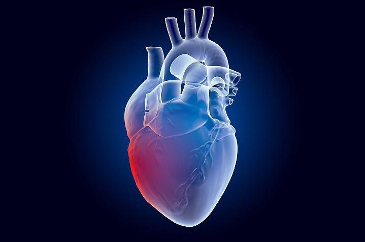 Drawing of a human heart
